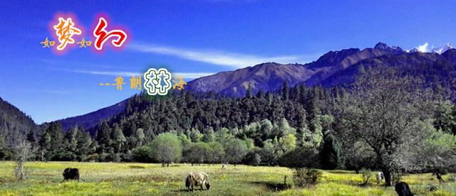 雅鲁藏布大峡谷+鲁朗林海3日 林芝最精华景区特约团